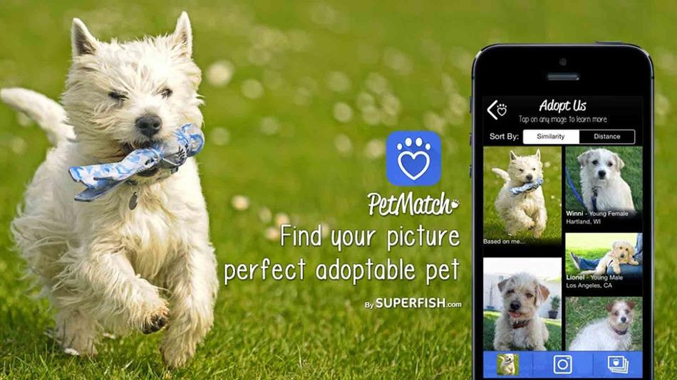 PetMatch. Հավելված, որը կօգնի գտնել Ձեր երազանքների շնիկին