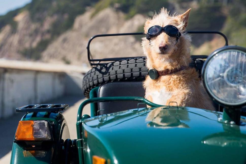 WhistleGPS. Գտնվելու վայրը վերահսկող կրելի սարք շների համար