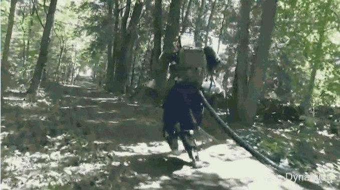 Մարդակերպ ռոբոտն ազատ շրջում է անտառով. տեսանյութ
